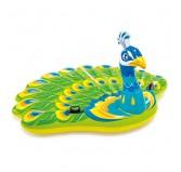 شناور بادی روی آب طاووس